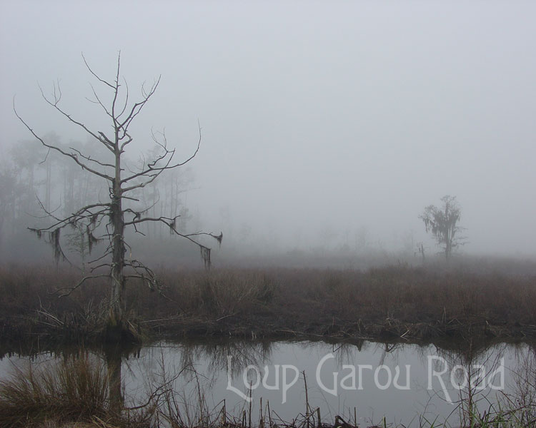 Fog on Bayou Paquet 1