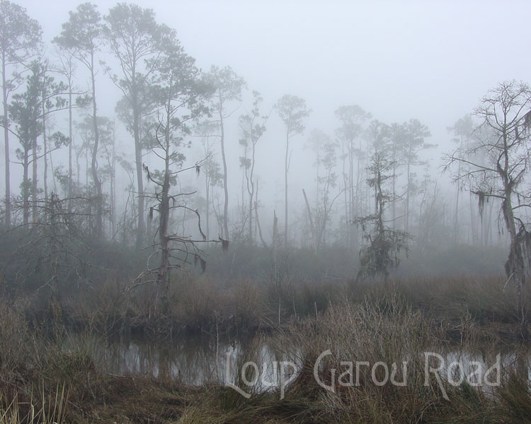 Fog on Bayou Paquet 2