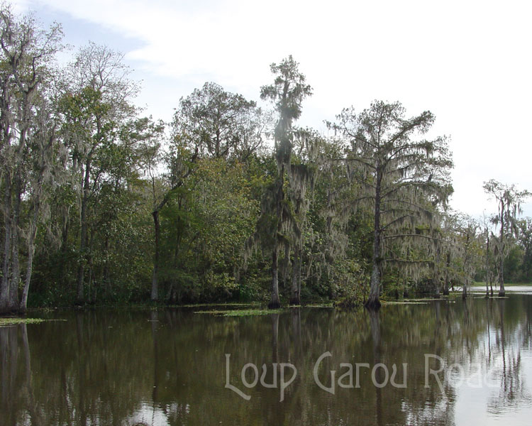 On Bayou Boeuf 2