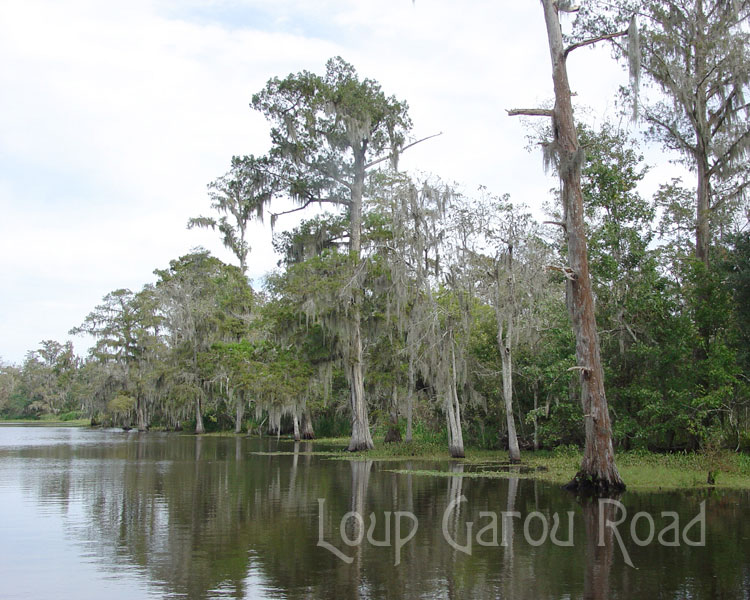 On Bayou Boeuf 4
